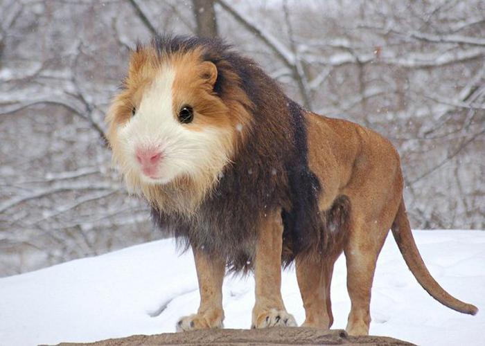 Смелый лев. Проект Photoshop Chimeras.