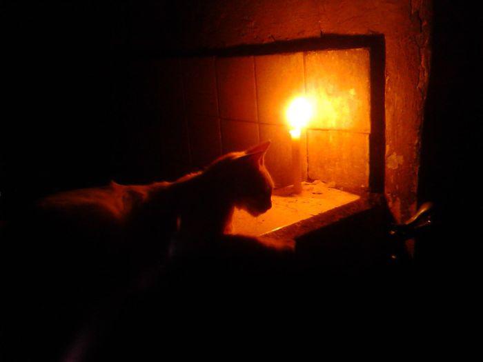 Кошка при свете свечи.