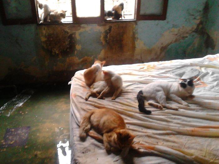 Кошки дома у семьи Рейносо в Венесуэле.