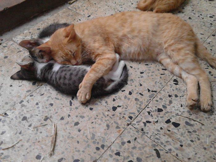 Два серых котенка Пинтикос были найдены Хавьером, когда тот искал питьевую воду в городе. Местные кошки приняли их радушно.