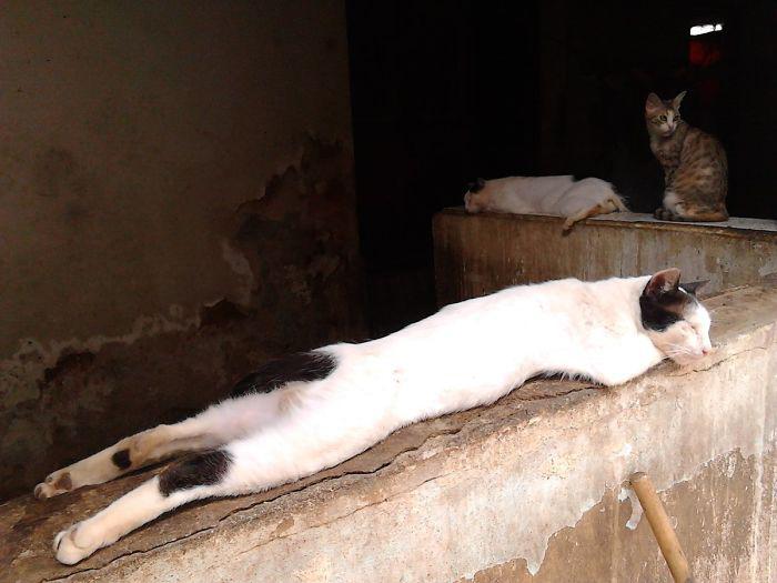 Кот Сирийо наслаждается солнечным теплом, не подозревая, что его сейчас отвезут к ветеринару для стерилизации.