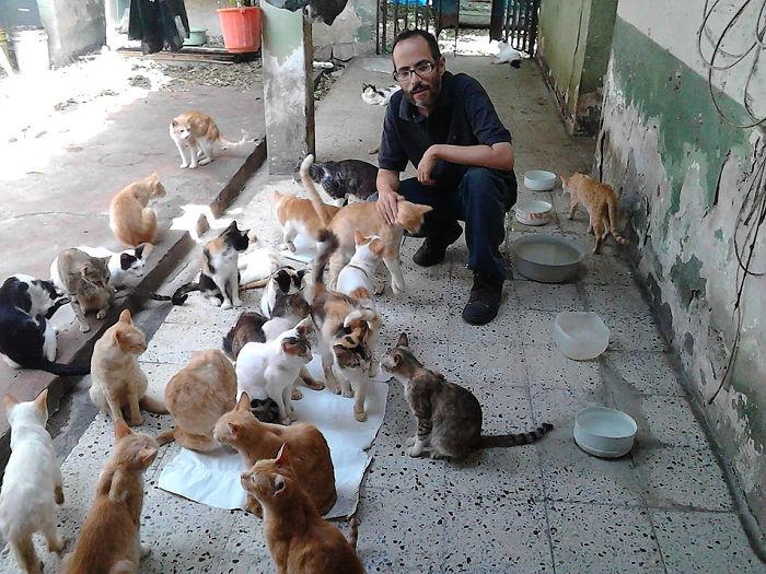 Сейчас в приюте более 50 кошек.