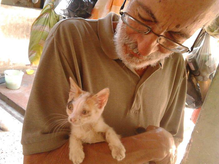 В приют кошки часто попадают в плохом состоянии - с инфекциями, с блохами и в ранах.