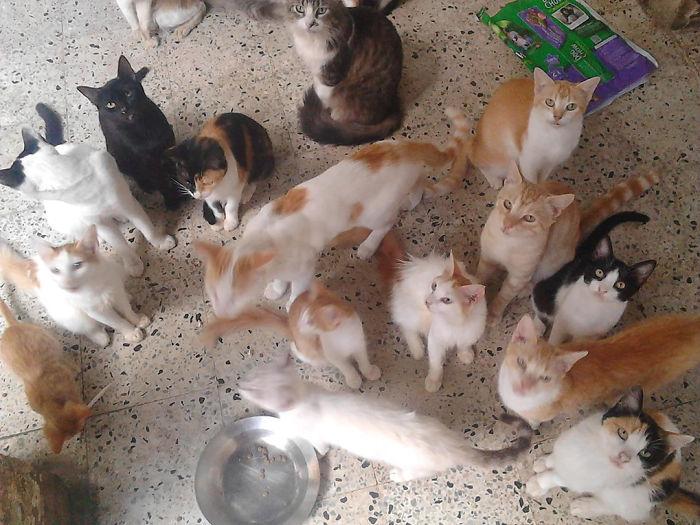Кошки приюта Рейносо.