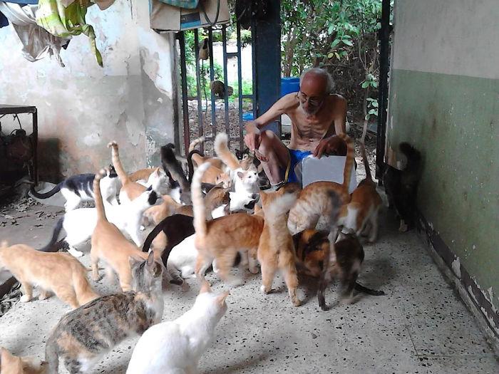 Кошки в Венесуэле.
