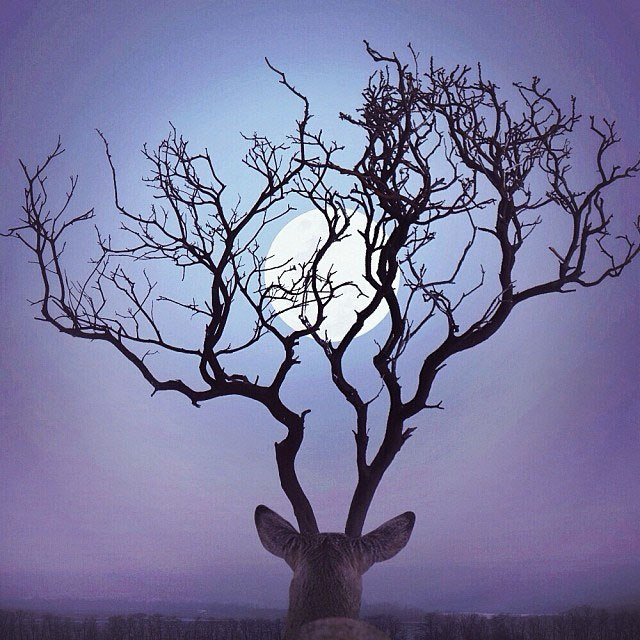 Когда мы одновременно смотрим на луну, мы как будто находимся рядом. Автор: Robert Jahns.