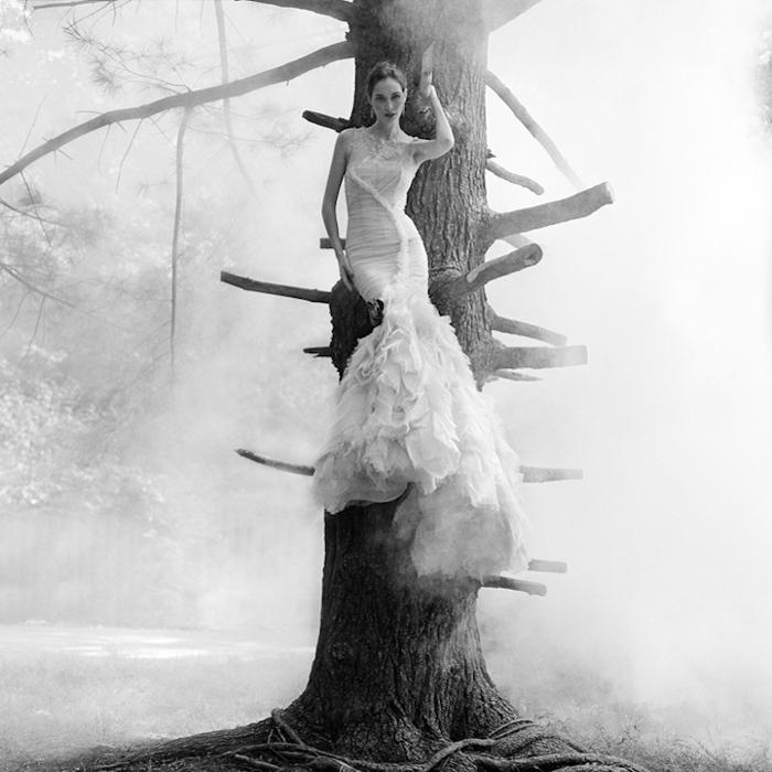 На дереве. Автор фото: Rodney Smith.