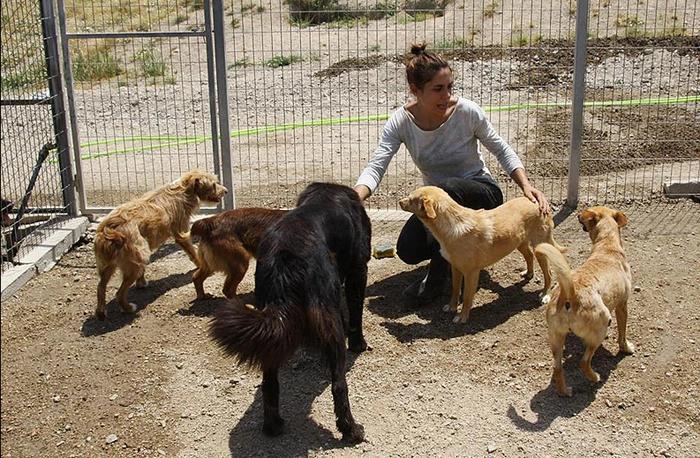 Лилиана Сантос с собаками в приюте.