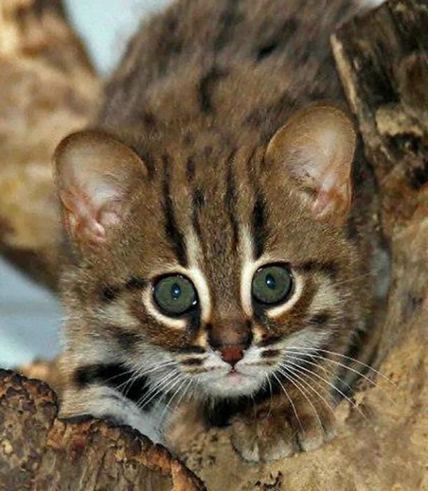 По внешнему виду ржавых кошек трудно понять, сколько им лет.