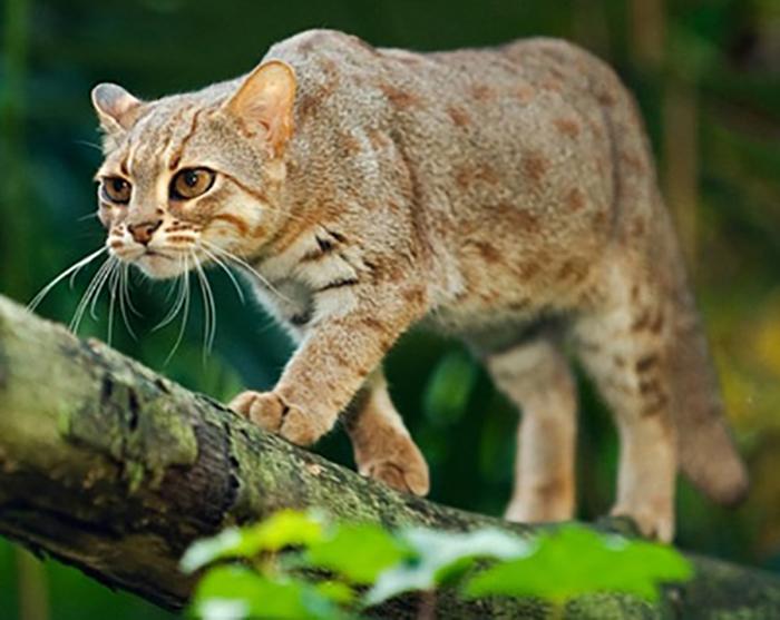 Ржавые кошки очень любопытные.
