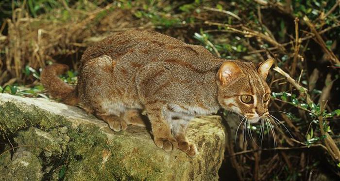 Сейчас эти животные на грани вымирания.