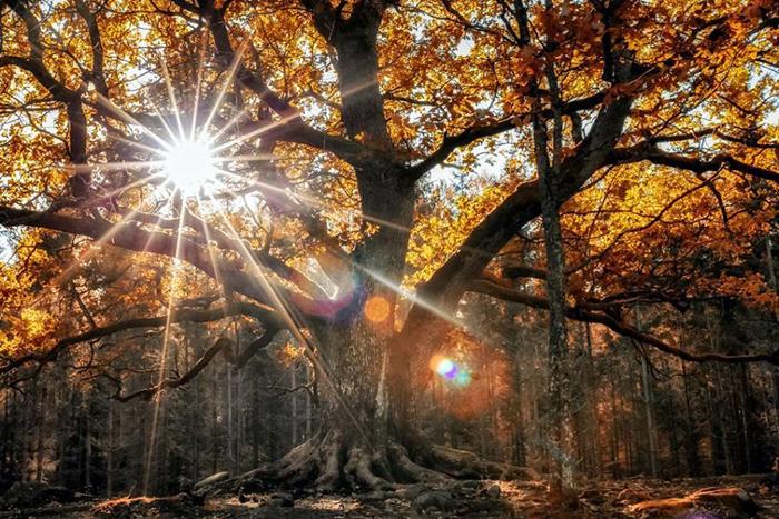 Волшебный лес.  Instagram soosseli.