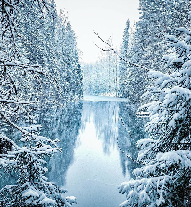 Зимний лес. Instagram soosseli.