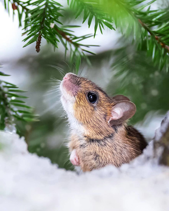 Бильбо принюхивается к зиме.  Instagram soosseli.