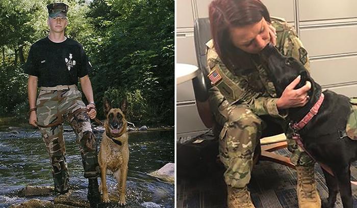 Собаки для ветеранов.