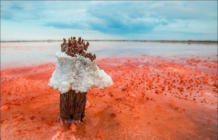 Сивашский залив. Фото: Сергей Анашкевич.