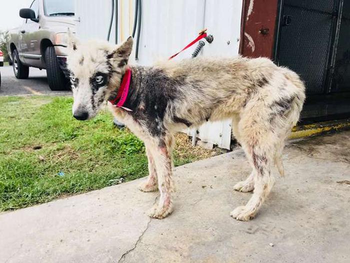 Чтобы спасти жизнь собаке, ее пришлось транспортировать за несколько сотен километров.
