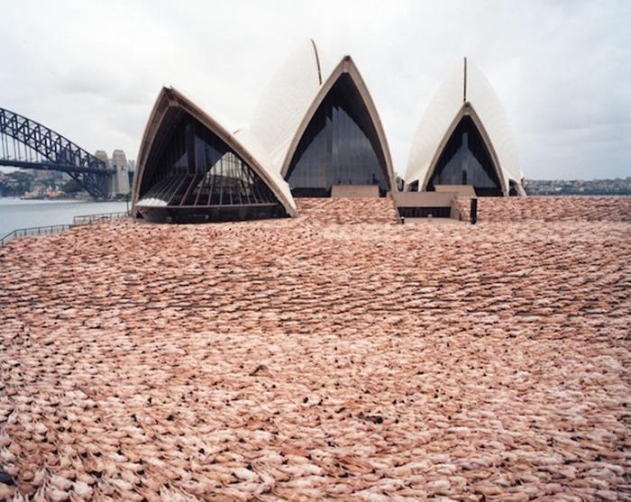 Сидней, Австралия, 2010 г.
