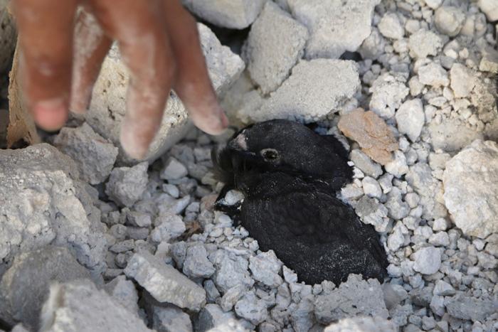 Мальчик пытается спасти птицу после бомбардировки города Алеппо. 12 июля 2015г.