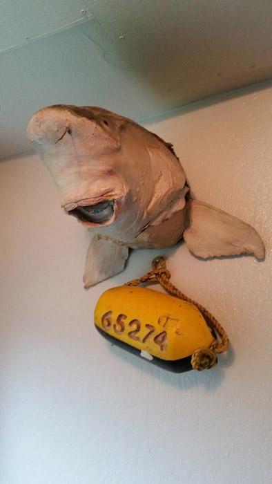 Эта акула, кажется, испортилась.