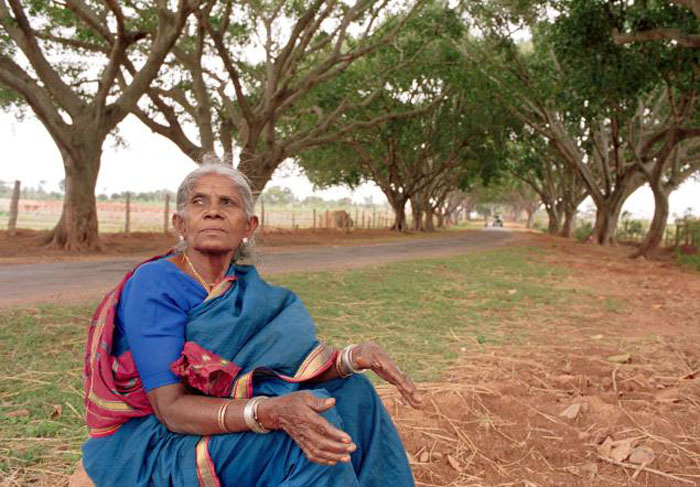 Saalumarada Thimmakka в аллее посаженных ею деревьев.