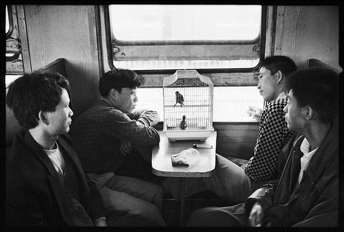 Птица в клетке.  Фото: Wang Fuchun.