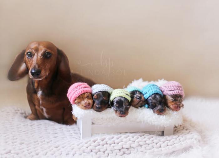 Гордая мама шестерых щенят.