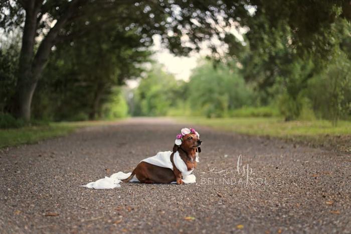 Фотосессия беременной собаки. Belinda Sol Photography.