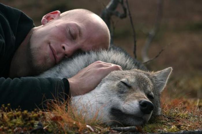 Ручные волки в Полярном Парке.