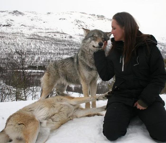 Уникальная возможность погладить волка и не быть после этого съеденным.
