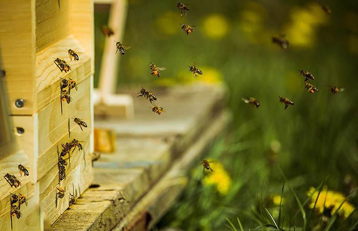 Фотограф Миао Ю сфотографировал пчел, возвращающихся домой, Германия. Фотограф признался, что во время съемки одна из пчел ужалила его.