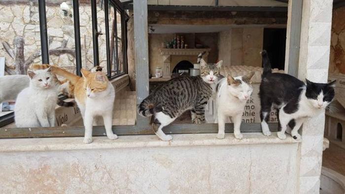 Сейчас в приюте находится более 60 котов.