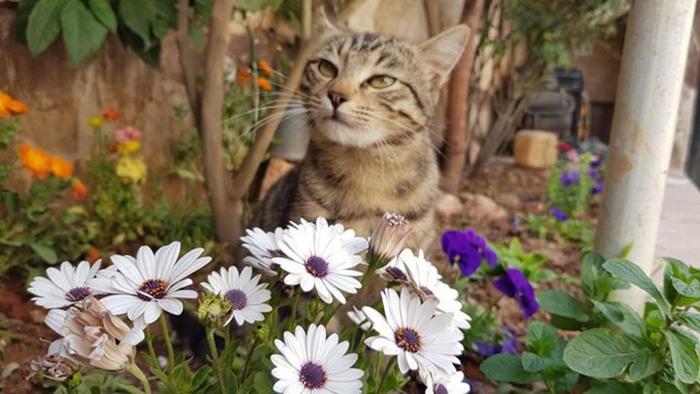 Один из котов в саду приюта.