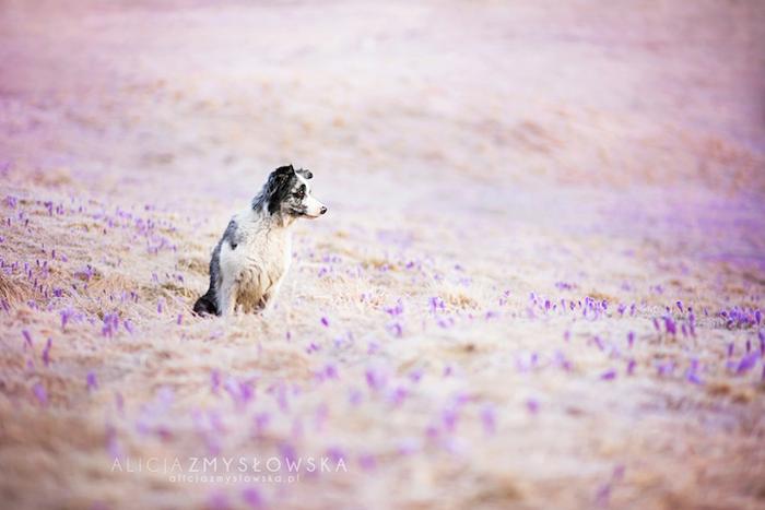 Фотографии, лучащиеся радостью и любовью к собакам.