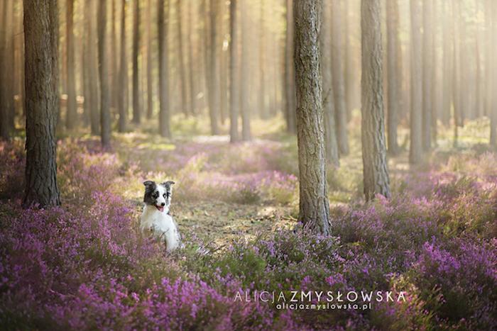 Фотосессия собак.