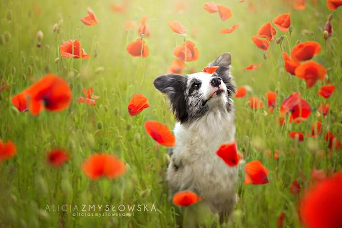 Любимая собака на цветочном лугу.