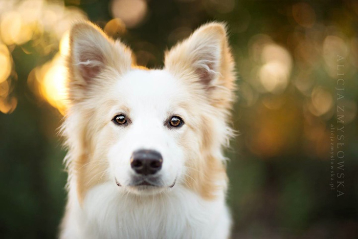 Жизнерадостные фотографии собак.