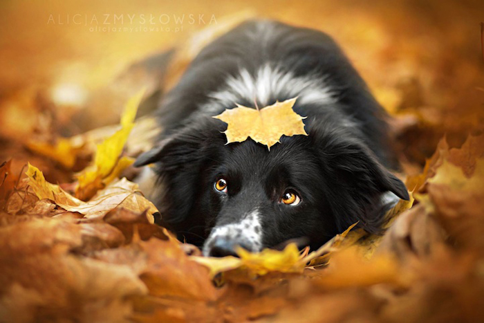 Осенняя фотосессия четвероногих любимцев.