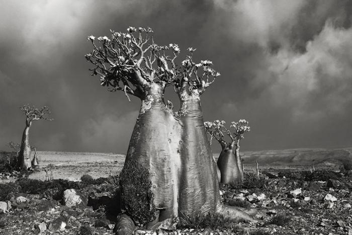 Роза пустыни (Wadi Fa Lang).