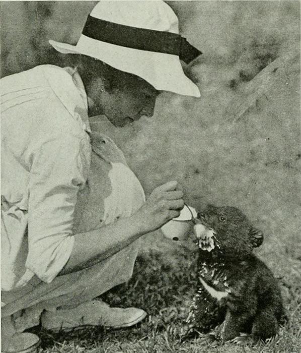 Жена Роя Иветт Боруп Эндрюс кормит тибетского медвежонка.