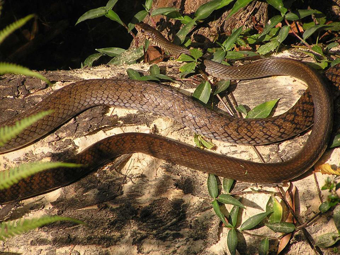 Змея из заповедника, созданного Анилом и Памелой Малотра.