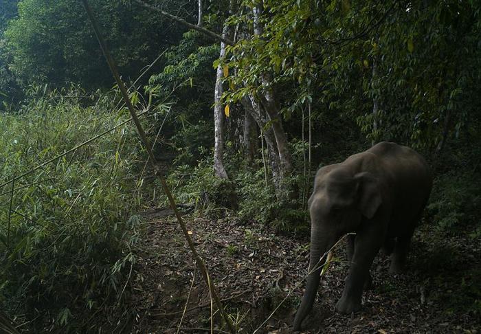 В заповеднике живут азиатские слоны.
