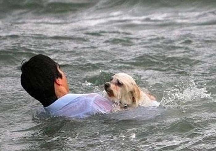 Маленькую собачку сдуло сильным порывом ветра в море в Мельбурне, Австралия. Прохожий, не раздумывая, прыгнул вслед, чтобы спасти животное.