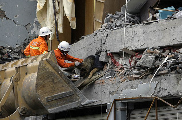После землетрясения в китайской провинции Сычуань спасатели вытаскивают из-под завалов немецкую овчарку.