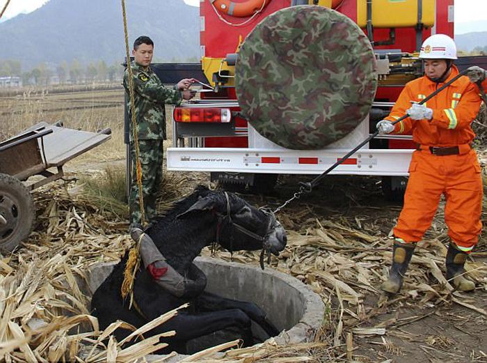 Осел подскользнулся и упал в колодец. Спасатели прибыли с специальной техникой, чтобы освободить животное.