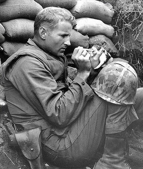Сержант Фрэнк Прейтор кормит двухнедельного котенка во время своей службы на войне в Корее.