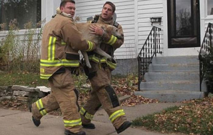 Пожарные вытащили собаку в полубессознательном состоянии из пожара.