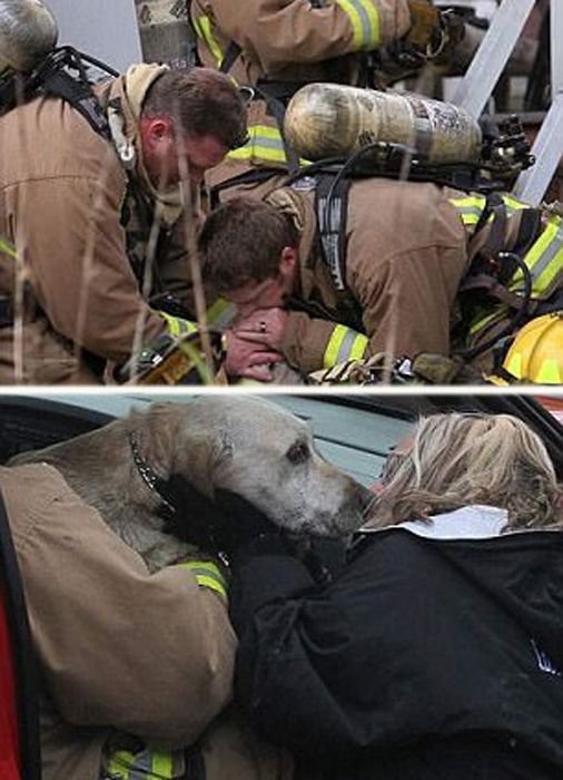 Доставив собаку в безопасное место, пожарным пришлось сделать ей искусственное дыхание, чтобы вернуть животное к жизни.