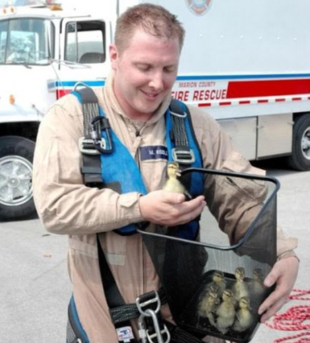 Пожарный усадил утят в мусорную корзину, чтобы вынести их всех разом из горящего здания.