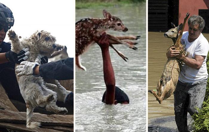 Спасенные животные.